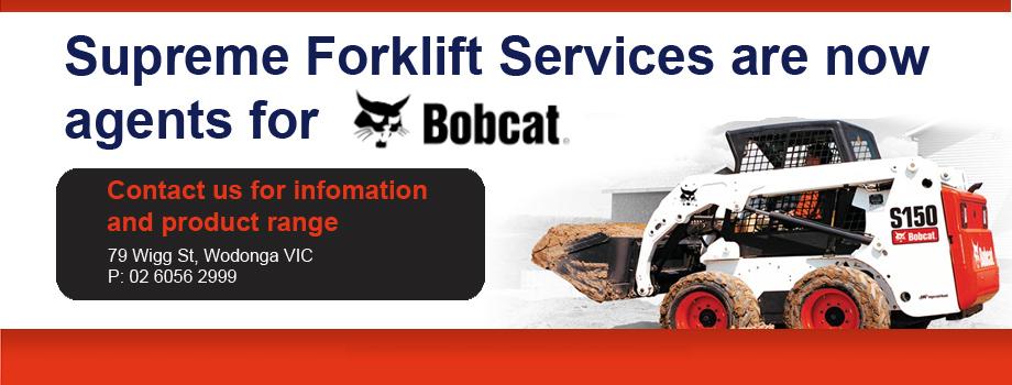 Bobcat, One Tough Animal!!